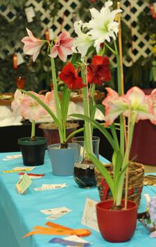 Standard Flower Show